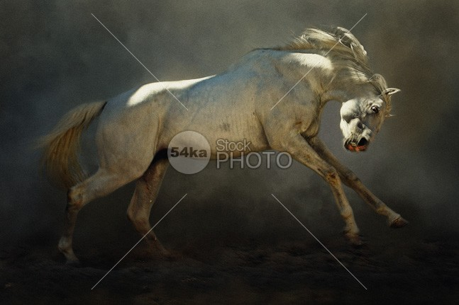 Mad Horse young yellow white up strong stallion speed Running run red rear power pony playing playful play photo outside one moving move mammal long jumping jump horse hair gallop freedom free fast equine equestrian beauty equestrian dust domestic color breed black beauty beautiful Art animal American action 54ka StockPhoto
