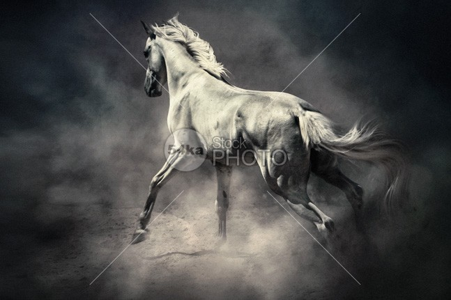 White Horse in Dust Equestrian Beauty young wild white tale Success strong start stallion speed silver sand Runner run ranch power photo nature moving Motion mane mammal Male light jump horse hoofed herd ground grey gray gallop freedom free force fastest fast equine equestrian beauty equestrian emotions dust black beast Art 54ka StockPhoto
