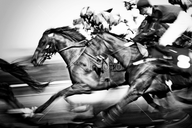 Horse racing whip wager track sport speed skill saddle running riding rail racehorse race print photo