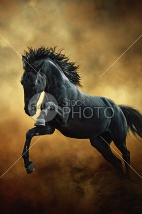 The Black Stallion in Dust Art Photography photo light landscape jump isolated horse hoofed herd head hair ground grey green gray grass grace gorgeous game gallop fun friesian freedom free forward force fight field fastest fast farm equine equestrian beauty equestrian emotions emotion dust domestic Desert countryside country color chestnut canter black beautyful horse image beauty beautiful beast Art animal active action 54ka StockPhoto