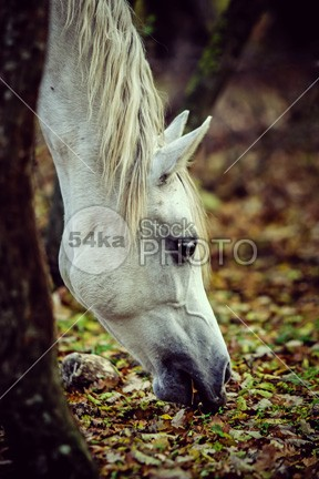 White Horse Resting On Spring Meadow photo nature natural Morning meadow mare mane mammal Male majestic light lawn landscape Lake horse head hair green grazing graze grass freedom forest flowers flower field fence feed farming farm equus equine photography equine equestrian beauty equestrian elegance eating domestic details countryside country carpathians brown breed bouquet beauty beautiful background autumn Art animals animal 54ka StockPhoto