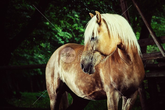 Haflinger Horse Equestrian Portrait mane mammal look long isolation isolated inquisitive horse photography horse horizontal head hair grey gorgeous gelding freedom free fragility fragile farm eyelash eye espanola equine equestrian beauty equestrian elegance ear domestic detail curious color closeup close breed body blue black and white black beauty beautiful bay background artistic Art animal andalusian andalusia active action 54ka StockPhoto