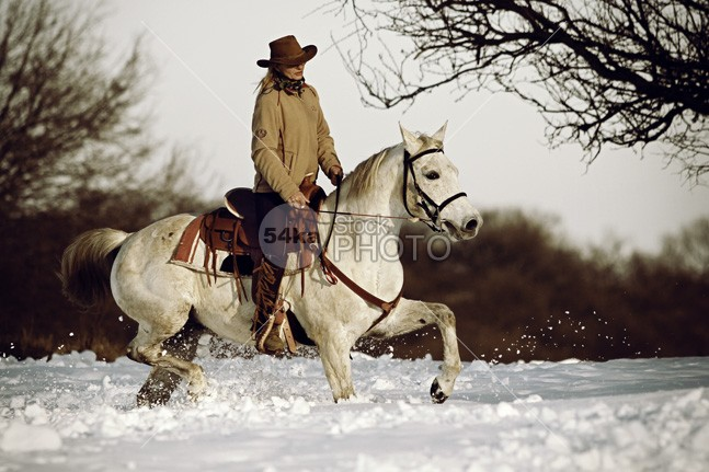 Winter Ride On The White Horse women woman winter white weather training trail stallion snow seasonal runners Runner run rider ride rest racer race person People pedigree outside outdoor nature mammal light Jockey horse girth girl gamble gallop frozen freedom farmland equine equestrian beauty equestrian dressage domestic curb countryside country color cold bridles beauty beautiful animal amazing 54ka StockPhoto