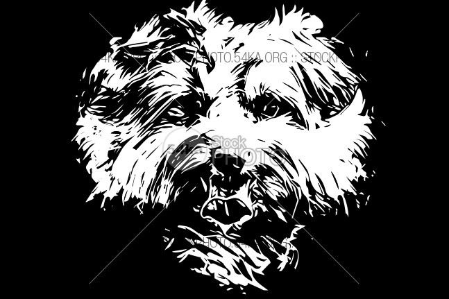 Yorkie – Yorkshire terrier dog vector art – Black Background yorkshire yorkie wondering toy tiny tilt terrier tan Tail small sketch shaggy ridiculous Puppy pup pooch pet peculiar pdf paws neck mini man's mammal lupus looking little legs lapdog isolated hand hairy furry fur funny friend free file familiaris EPS drawn drawing download domesticated domestic dog cute curious cozy coat Canis canine camera black best background at apartment animal ai adorable 54ka StockPhoto
