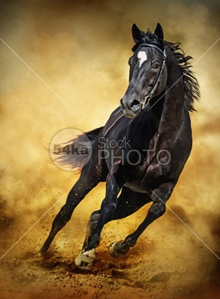 Black Horse – Running Wild photo performance pedigreed outside outdoor orange one nature moving Motion meadow mare mane mammal light jump horses horse horizontal hoofed high ground gallop freedom free forward force fast expressive expression expensive equine equestrian beauty equestrian english emotions elegant elegance dust body black beauty beautiful beast background Art animal andalusian active action 54ka StockPhoto