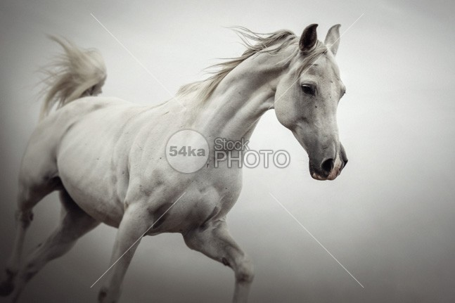 White Horse on The White Background – Equestrian Beauty forward focus field farm animals farm Family face eye estuary equine equestrian photography equestrian beauty equestrian energy elegance ear dust draft horse domestic animals domestic detail day darkness dark dapple curious countryside cold closeup close card breed black and white black bend Beauty In Nature beauty beautiful background b&w artistic Art arabian arab Animal Head Animal Body animal andalusian Activity action 54ka StockPhoto