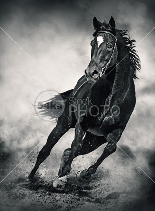 Black Horse – Running Wild – Black and White performance pedigreed outside outdoor orange one nature moving Motion meadow mare mane mammal light jump horses horse horizontal hoofed high ground gallop freedom free forward force fast expressive expression expensive equine equestrian beauty equestrian english emotions elegant elegance dust body black and white black beauty beautiful beast background Art animal andalusian active action 54ka StockPhoto