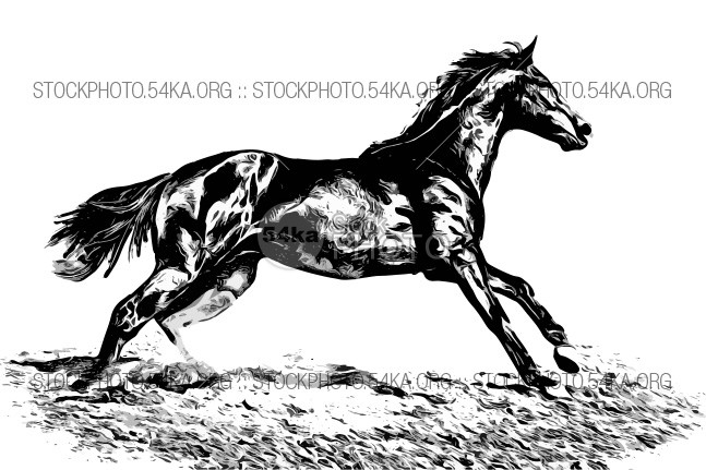 Horse vector isolated on white background for wall concept art and logo design wild walking vectors Vector Standing stallion sprint silouettes silouette sillouette silhouettes silhouetted Silhouette show shadow set Running rearing realistic rampant race poses outline mustang legs jumping isolated horses horse hind gallop full equestrian design charging canter bucking buck bronco body black animal action 54ka StockPhoto